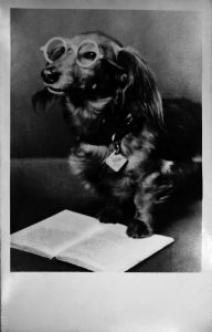 Dachshund of dr Zofia Lubina Kawecka, the librarian of UL between 1950-1958. Photo Rkp. 3189